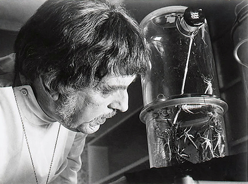 The Abominable Dr. Phibes 61