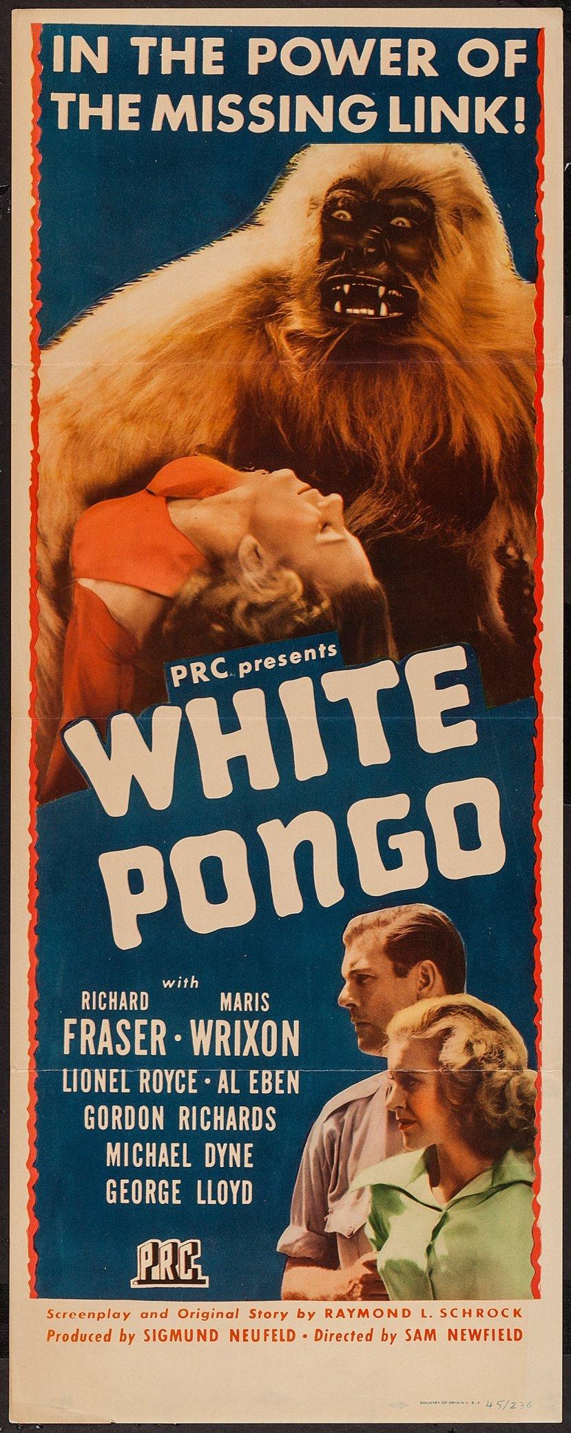 white-pongo-2