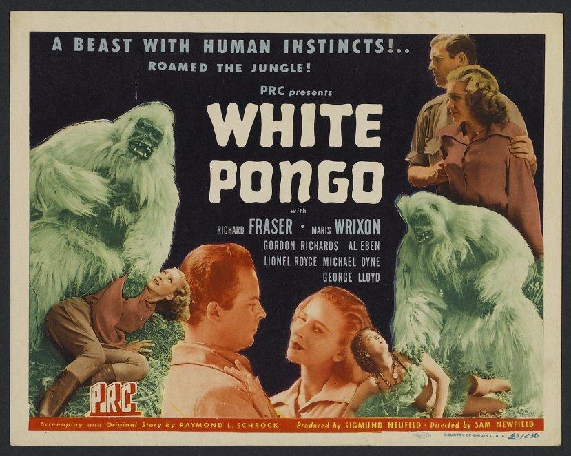 white-pongo-3