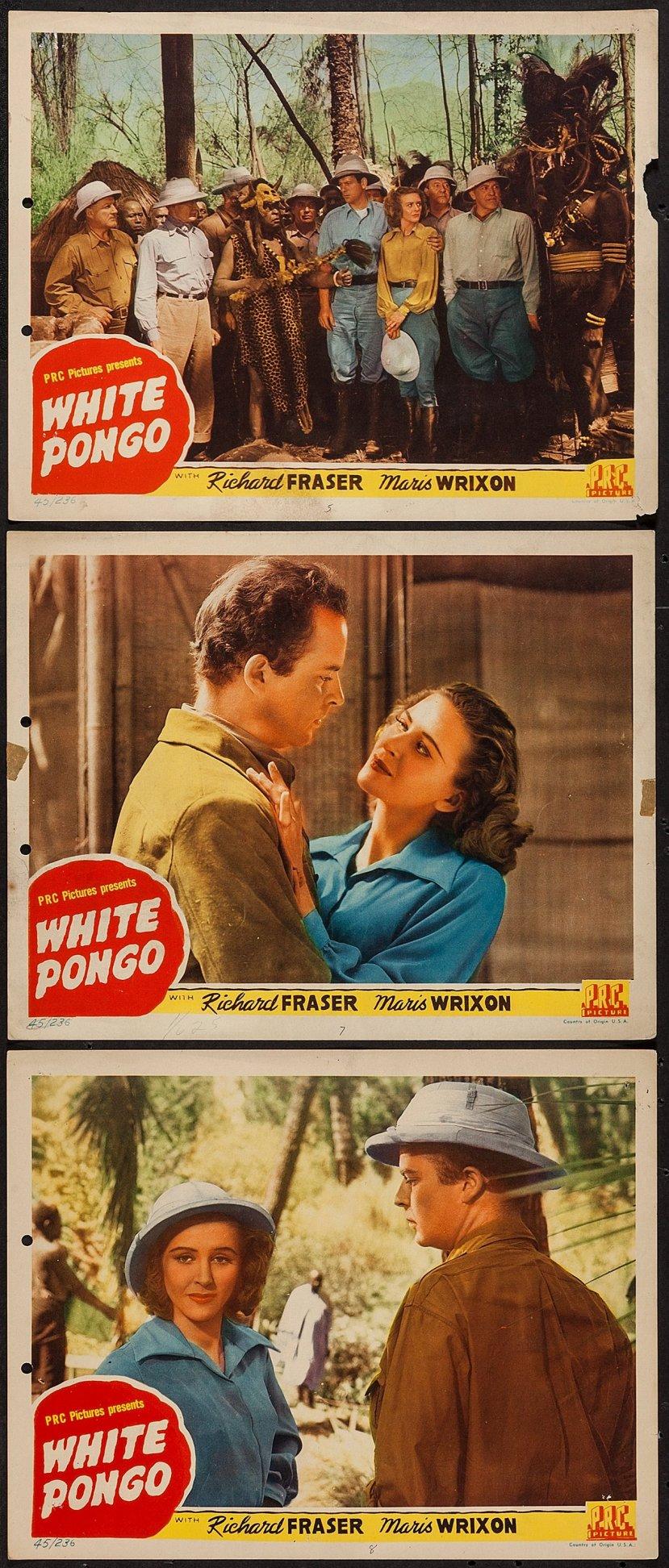 white-pongo-4